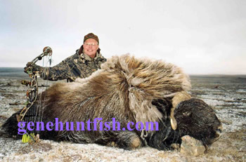 Hunter and His Muskox