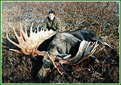 Moose hunts-2