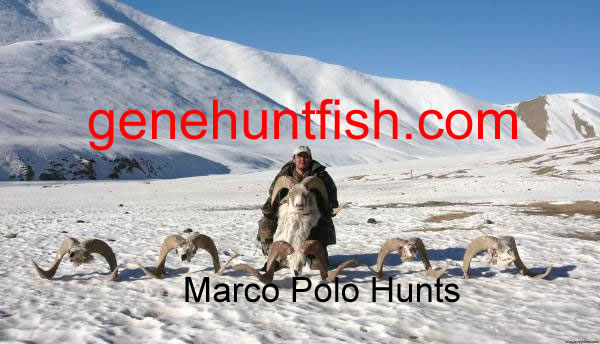 Rinat's Marco Polo Hunts
