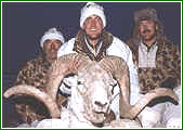 Hunter and Marco Polo Sheep