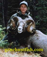 Geno And Huge Rocky Mt. Bighorn Sheep