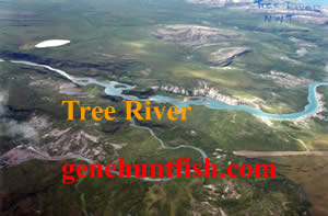 Tree River NWT