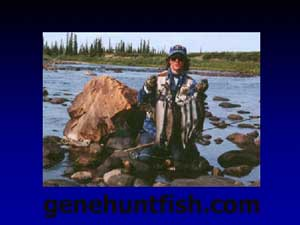 Geno Grayling From The Bloody river NWT