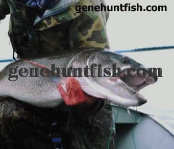 Geno and Huge Lake Trout-3