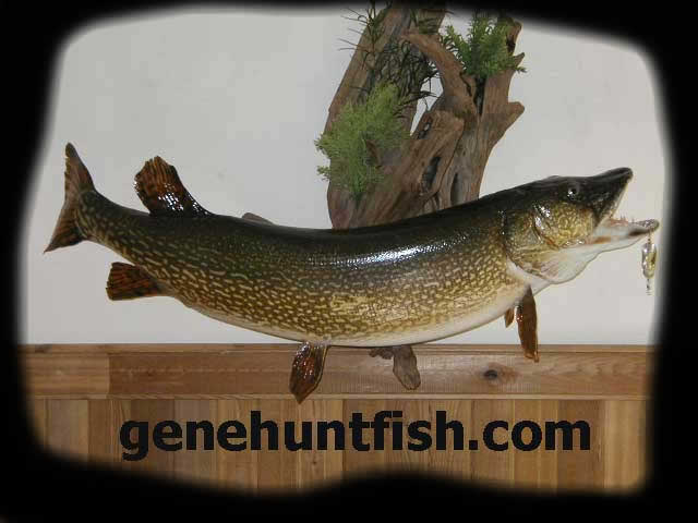 Northern Pike Mount