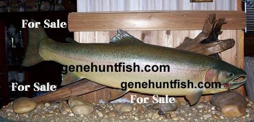 Steelhead Mount For Sale